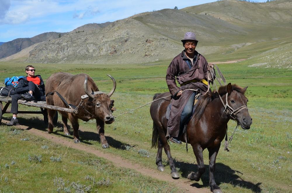 rando-yak
