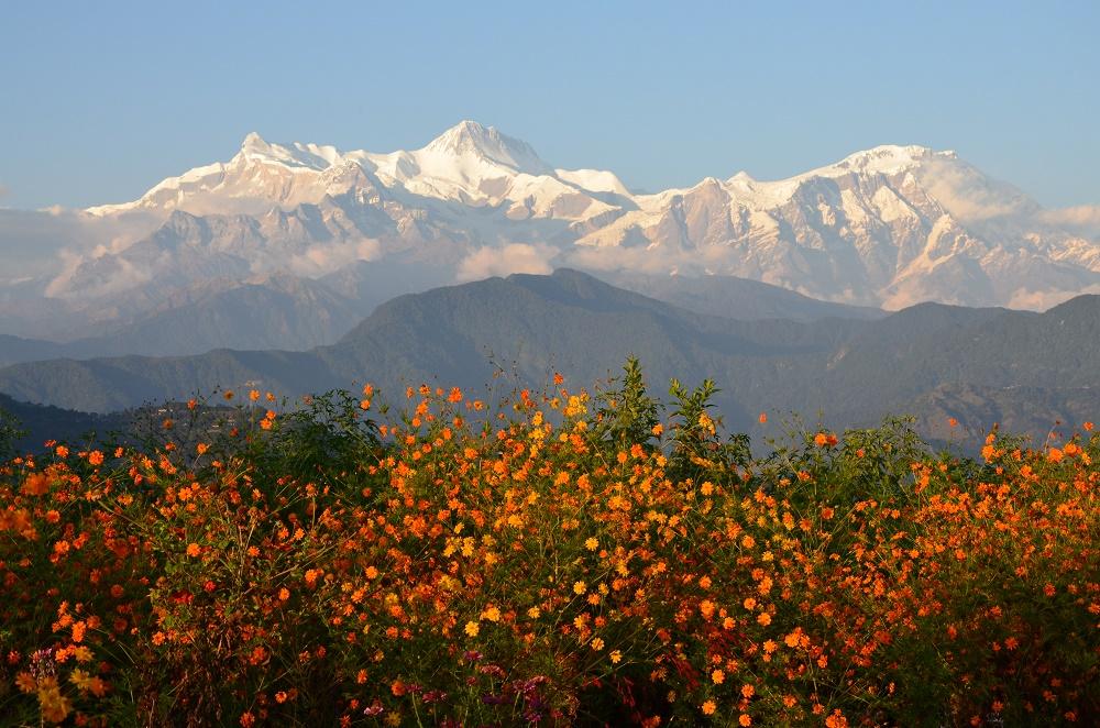 11-fleurs-et-montagnes