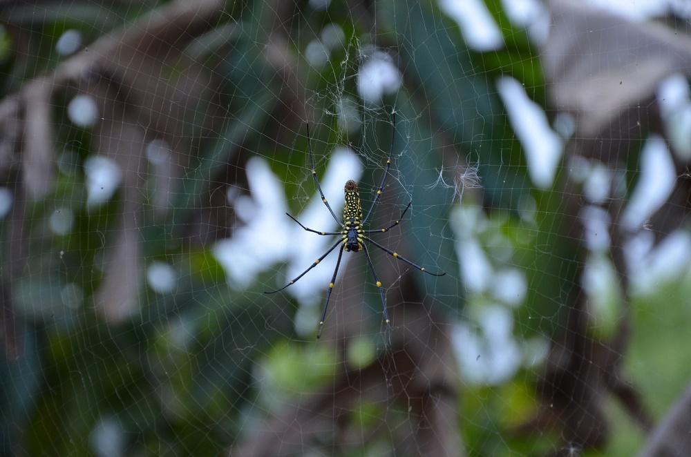 05 - Araignée