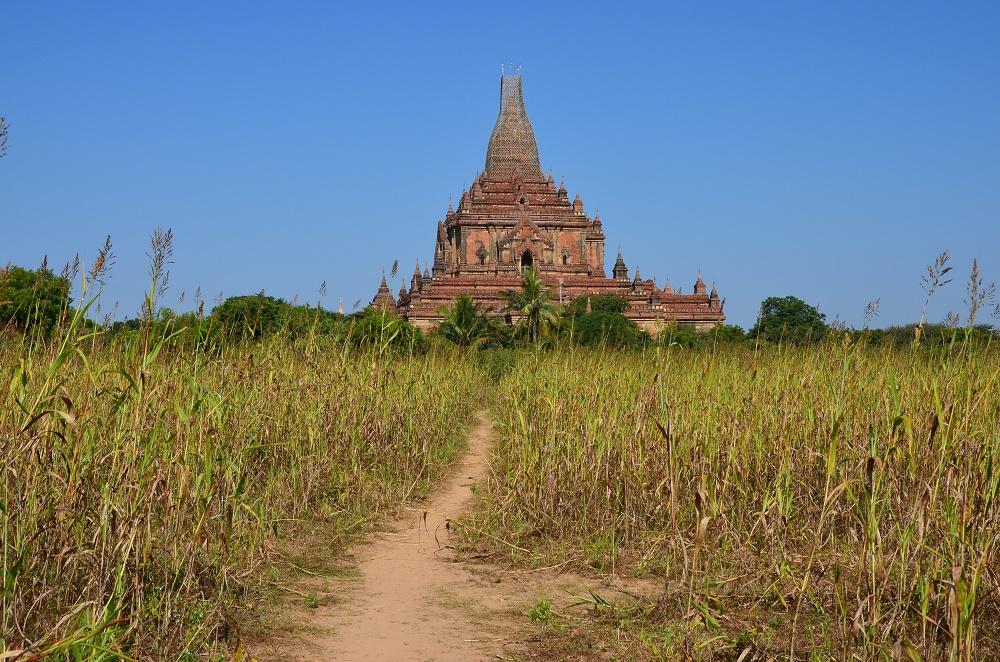 11 - pagode dans les champs