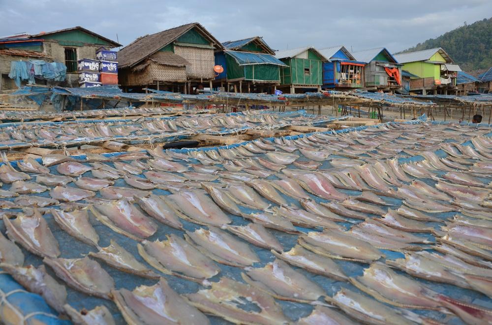 20 - poissons séchant au soleil