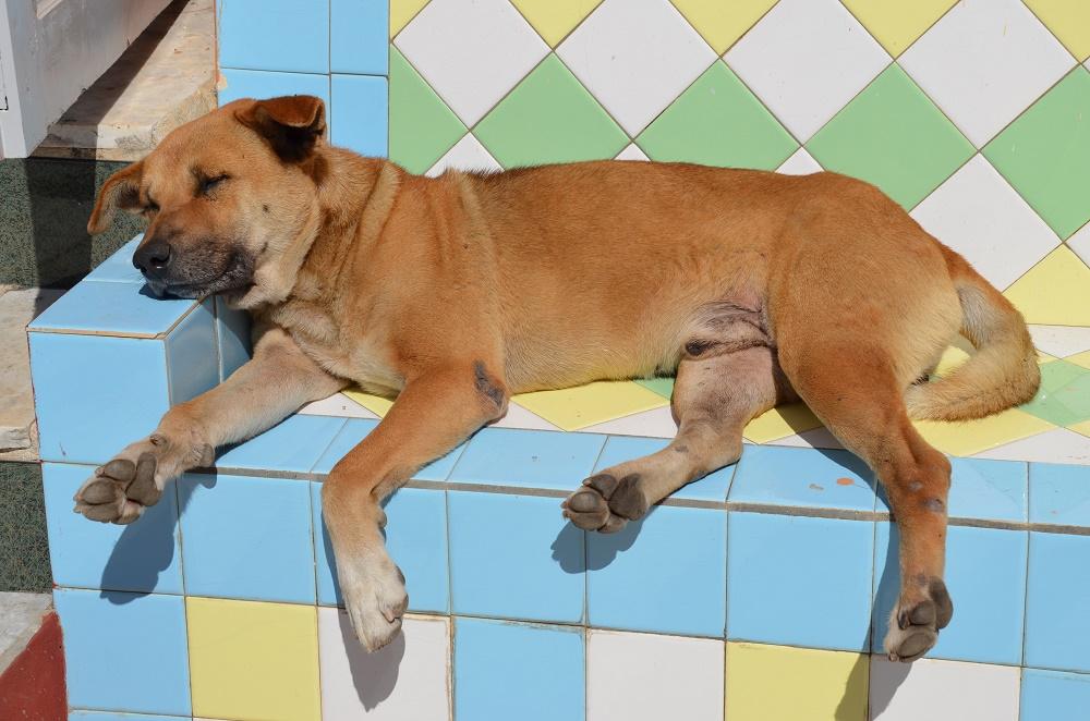 26 - La sieste du chien