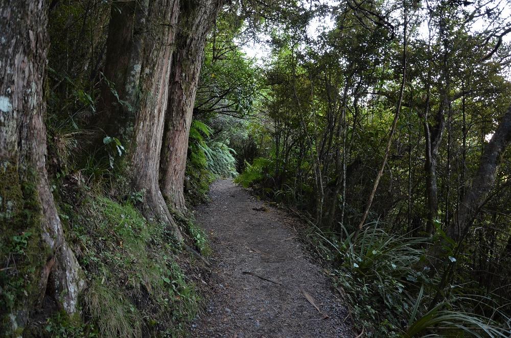 24 - Forêt