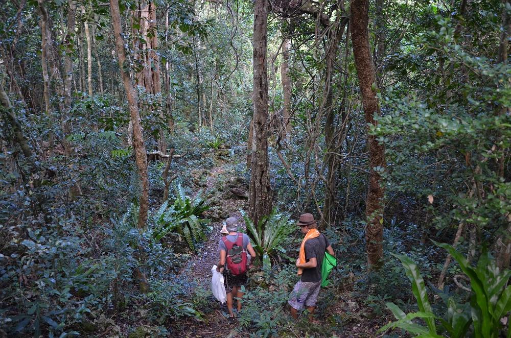 35 - petite marche dans la forêt