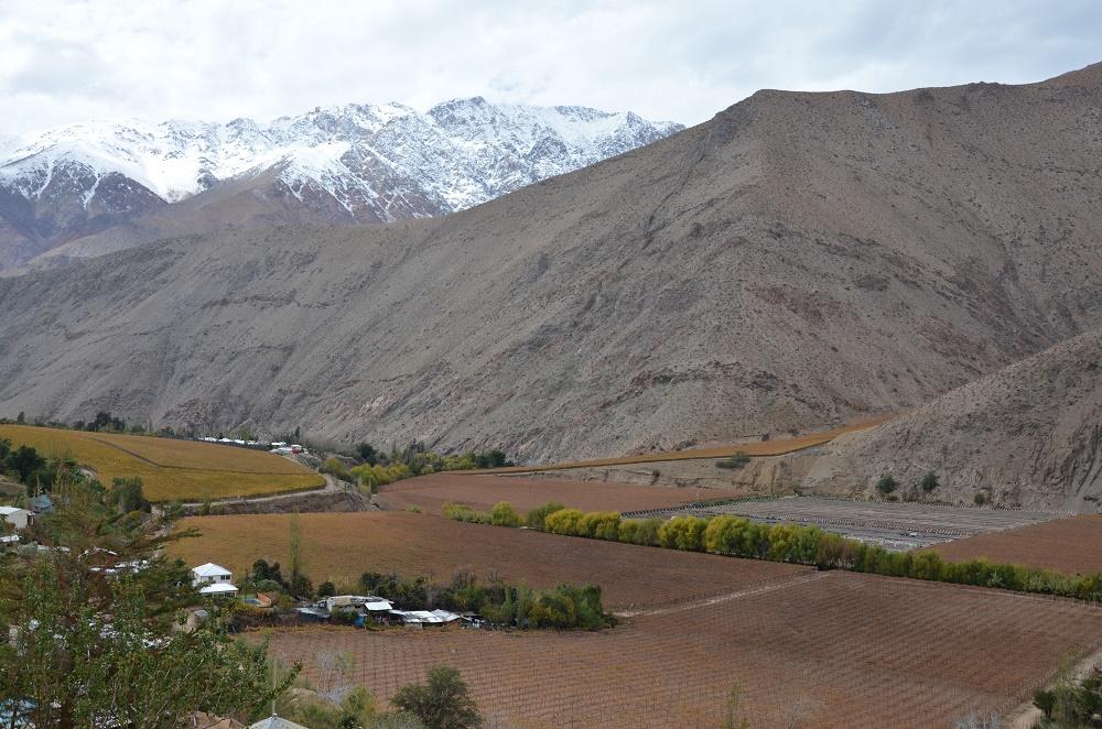 11 - Pisco Elqui