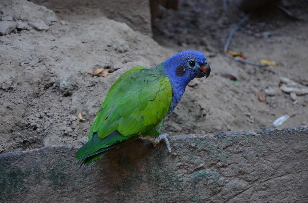 02 - et le perroquet qui parle