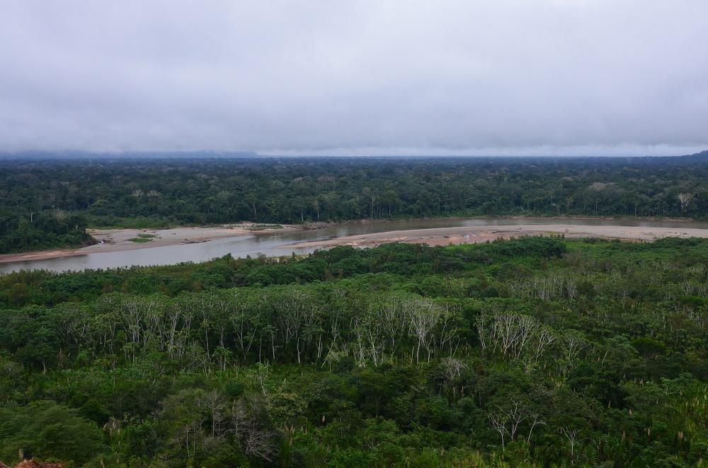 10bis - vue sur la forêt amazonienne, à côté du campement