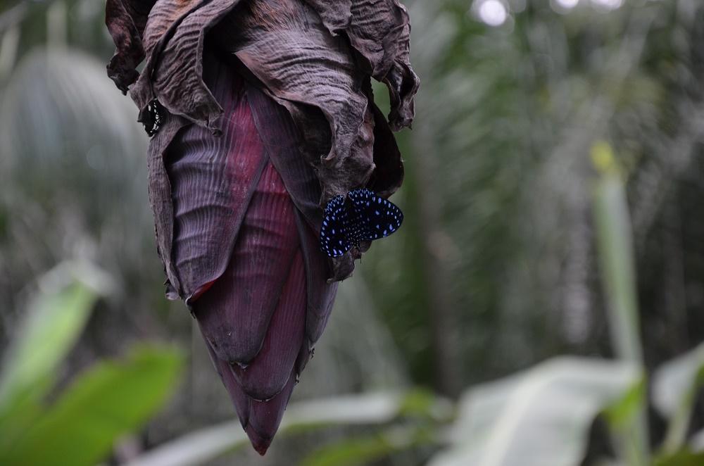17 - beau papillon