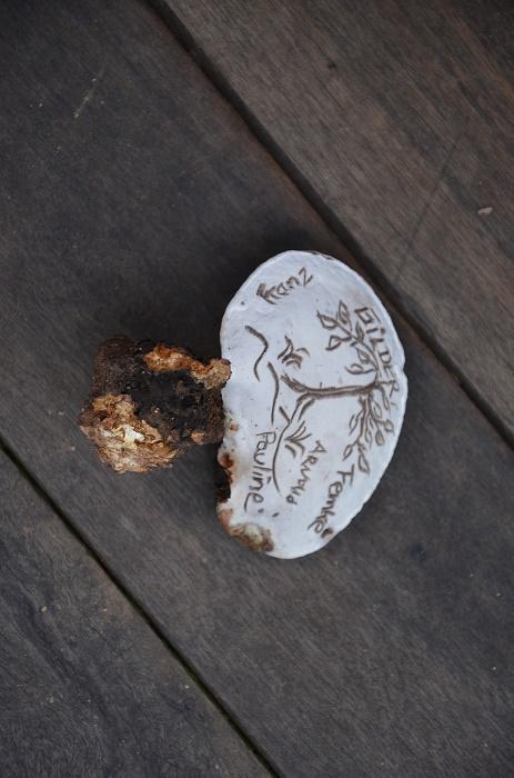 21 - champignon-feuille