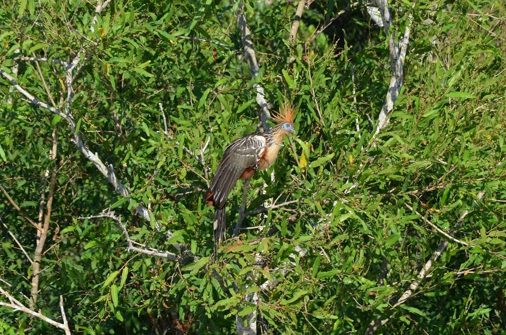 35 - oiseau préhistorique
