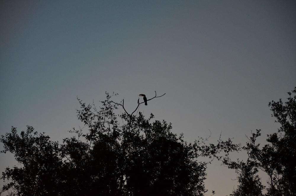 42 - toucan au coucher de soleil