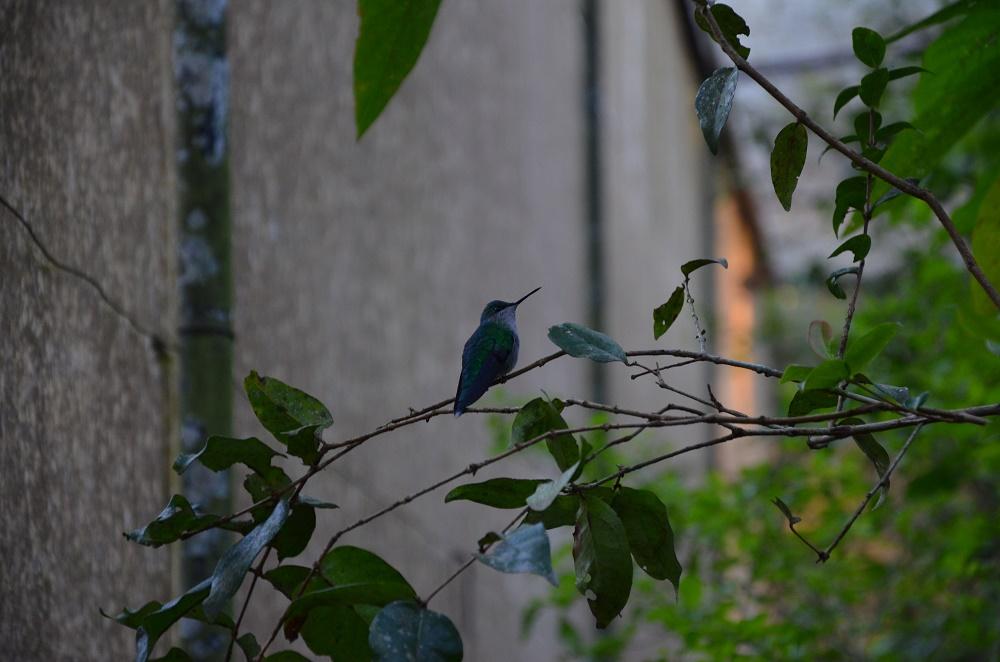 28 - Parque das Aves